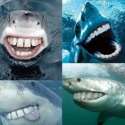 squali-con-denti-umani
