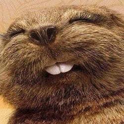 dentista roma e i denti da castoro.