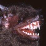Dentista Roma Termini denti pipistrello.