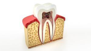 forma dei denti